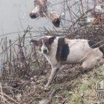 Криворожские пожарные спасли пса, который провалился на льду и чуть не утонул в реке