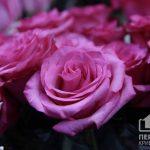 Сколько стоит букет цветов на 14 февраля в Кривом Роге