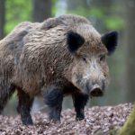 Зайці, дикі кабани та фазани: у Дніпропетровській області провели зимовий «перепис» диких тварин