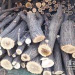 В Кривом Роге праоохранители задержали на месте преступления «черного лесоруба»