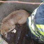 Криворожские спасатели помогли собаке выбраться из колодца