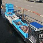 В Кривом Роге пресекли очередную незаконную торговлю рыбой «с рук»