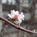Погода в Кривом Роге 3 марта и гороскоп
