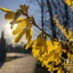 Какой будет погода в Кривом Роге 5 марта и что советуют астрологи