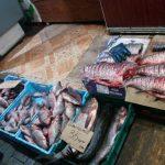 Полтонны рыбы в феврале на территории Днепропетровской области изъяли инспекторы рыбоохранного патруля