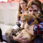 Международная выставка кошек состоялась на выходных в Кривом Роге
