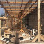 Криворіжців просять допомогти облаштувати зооготель