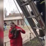 В Кривом Роге спасатели сняли с дерева кота