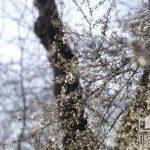 Погода в Кривом Роге 20 марта и гороскоп