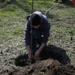 Из-за карантина в Кривом Роге и Днепропетровской области перенесли акцию по озеленению