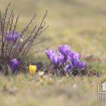Какой будет погода в Кривом Роге 23 марта и что советуют астрологи в этот день