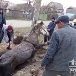 Коня, который упал в яму, спасли криворожские пожарные