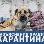 Прогулки с детьми, животными и другие правила карантина, — Кабмин