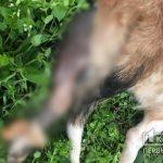 В Кривом Роге злоумышленники сняли шкуру с собаки