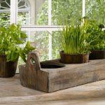 Домашний огород: что можно вырастить на подоконнике
