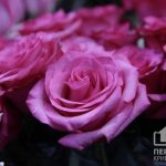 Криворожанка, которая «отдала» парню одну розу, заплатит 17 тысяч гривен штрафа за нарушение правил карантина