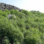 На хвостохранилище Северного ГОКа для пылеподавления используют зеленые технологии