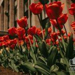 Какой будет погода в Кривом Роге 20 апреля