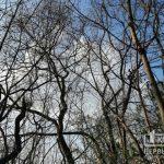 Прогноз погоды в Кривом Роге на 25 апреля