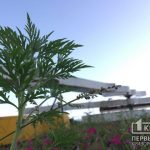 Чиновники не нашли фирму, которая займется подавлением роста амброзии в Кривом Роге