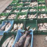 В Кривом Роге правоохранители и общественники изъяли почти тонну незаконно выловленной рыбы