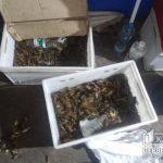 В Кривом Роге правоохранители изъяли 25 килограммов раков