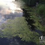 В водоеме возле криворожского ботсада обнаружили труп мужчины