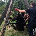 Пожарные и криворожане спасли беременную кобылу