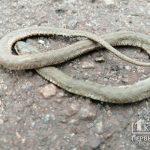 Четверо жителей Днепропетровской области пострадали от укусов змей с начала 2020 года