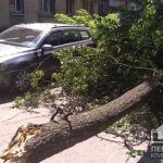 В Кривом Роге дерево рухнуло на Volkswagen Passat