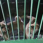 Для криворожского Центра обращения с животными разработают документацию по влиянию на окружающую среду