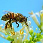 Советы от редакции «Первого Криворожского»: что делать, если укусила пчела