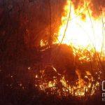 18 раз за сутки спасателям сообщали о горящей сухой траве в Кривом Роге и Криворожском районе