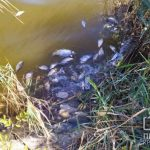 Массовая гибель рыбы в криворожском пруду беспокоит горожан
