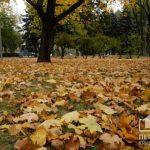 ТОП-5 причин не сжигать опавшие листья, — подборка от «Первого Криворожского»