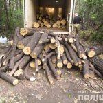 В Кривом Роге на территории промзоны задержали «черного лесоруба»