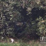 В криворожском парке обнаружен труп мужчины