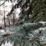 Какой будет погода в Кривом Роге 6 декабря