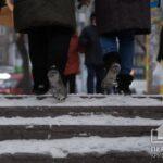 Прогноз погоды в Кривом Роге на 10 февраля