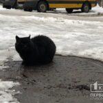 Криворожане требуют признать котов частью экосистемы города