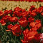 Пасха, День труда и День Победы: сколько выходных будет в мае