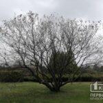 Прогноз погоды на 2 мая в Кривом Роге