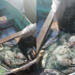 Нарушитель выловил в Криворожском районе рыбы на 8 тысяч гривен