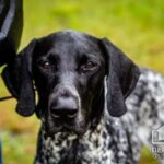 Выставка охотничьих собак в Кривом Роге
