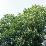 Погода Кривой Рог: прогноз на 5 июня