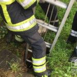 Криворожские спасатели достали кота из канализационного люка