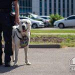 Криворізький кінолог з собакою візьме участь у параді до Дня Незалежності