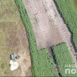 Двое криворожан выращивали плантацию конопли с капельным поливом