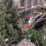В Кривом Роге упало два тополя и повредили автомобили