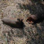 У Криворізькому районі знайшли застарілий артилерійський снаряд